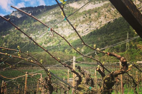 Trento DOC appellation Vineyards